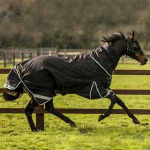 Thoroughbred wearing rug