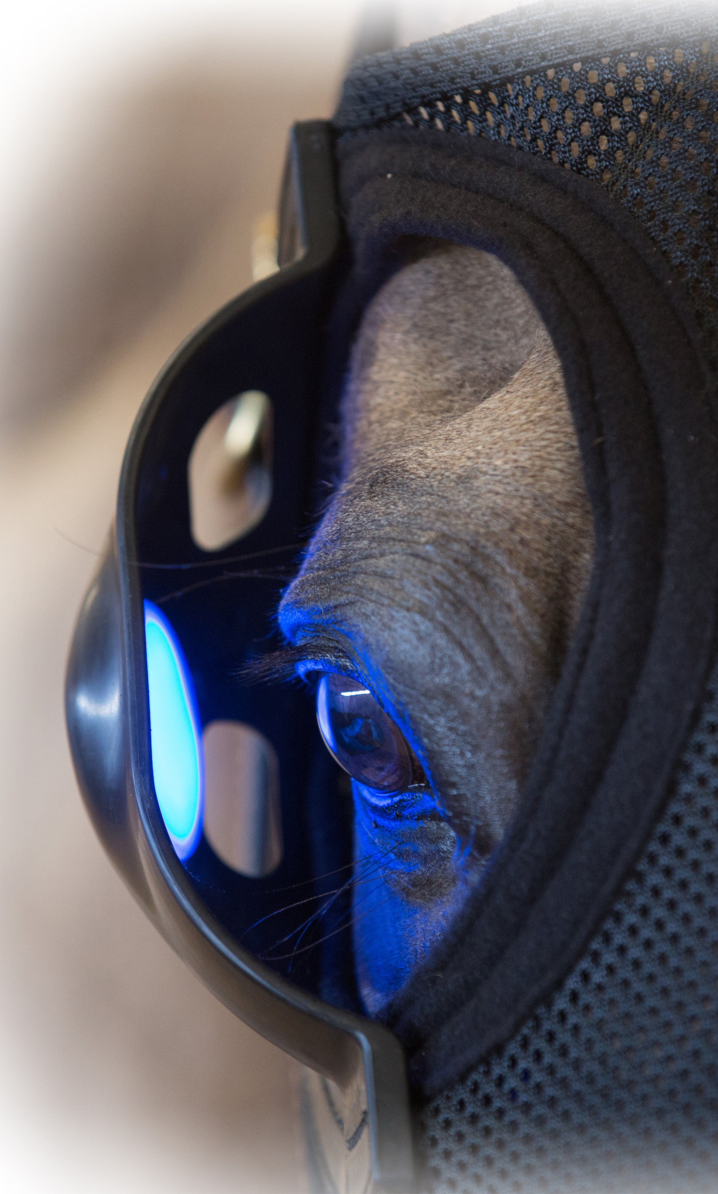 Equine Blue Light Therapy